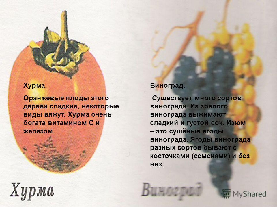Зачем мыть Хурма. Оранжевые плоды этого дерева сладкие, некоторые виды вяжут. Хурма очень богата витамином С и железом. Виноград. Существует много сортов винограда. Из зрелого винограда выжимают сладкий и густой сок. Изюм – это сушёные ягоды виноград