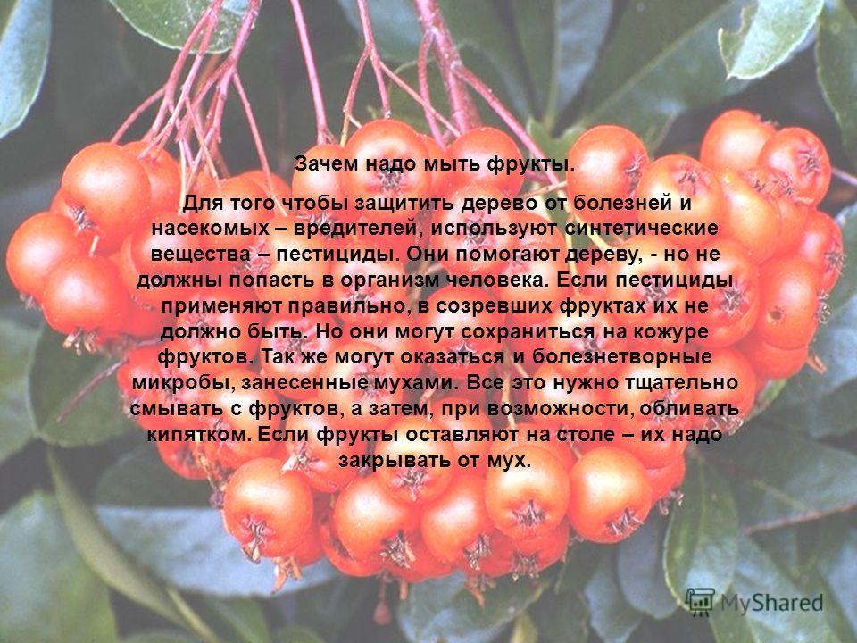 Зачем надо мыть фрукты. Для того чтобы защитить дерево от болезней и насекомых – вредителей, используют синтетические вещества – пестициды. Они помогают дереву, - но не должны попасть в организм человека. Если пестициды применяют правильно, в созревш