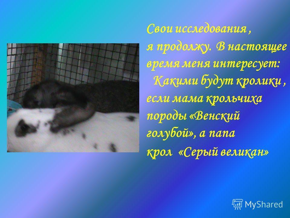 Свои исследования, я продолжу. В настоящее время меня интересует: Какими будут кролики, если мама крольчиха породы «Венский голубой», а папа крол «Серый великан»