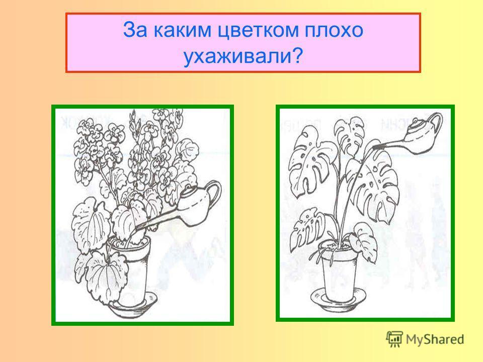 За каким цветком плохо ухаживали?