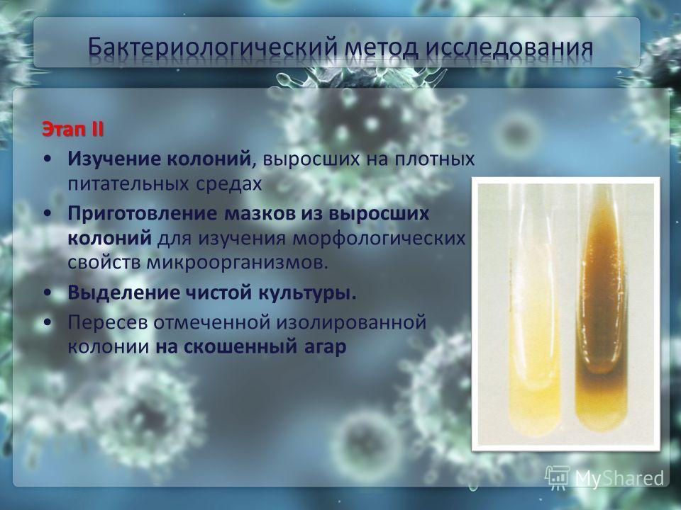 Этап II Изучение колоний, выросших на плотных питательных средах Приготовление мазков из выросших колоний для изучения морфологических свойств микроорганизмов. Выделение чистой культуры. Пересев отмеченной изолированной колонии на скошенный агар