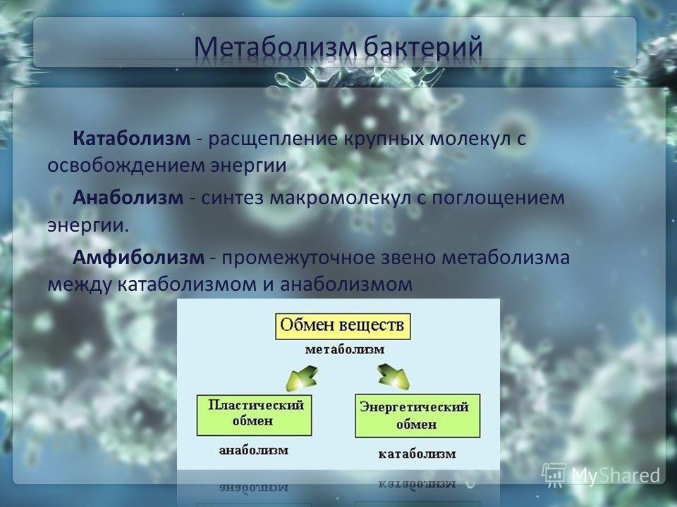 Катаболизм - расщепление крупных молекул с освобождением энергии Анаболизм - синтез макромолекул с поглощением энергии. Амфиболизм - промежуточное звено метаболизма между катаболизмом и анаболизмом