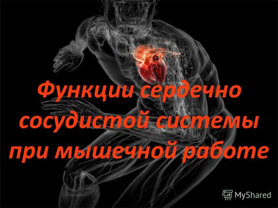 Функции сердечно сосудистой системы при мышечной работе