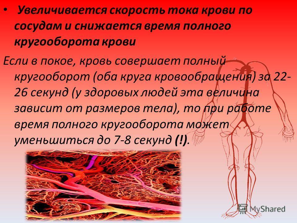 Увеличивается скорость тока крови по сосудам и снижается время полного кругооборота крови Если в покое, кровь совершает полный кругооборот (оба круга кровообращения) за 22- 26 секунд (у здоровых людей эта величина зависит от размеров тела), то при ра