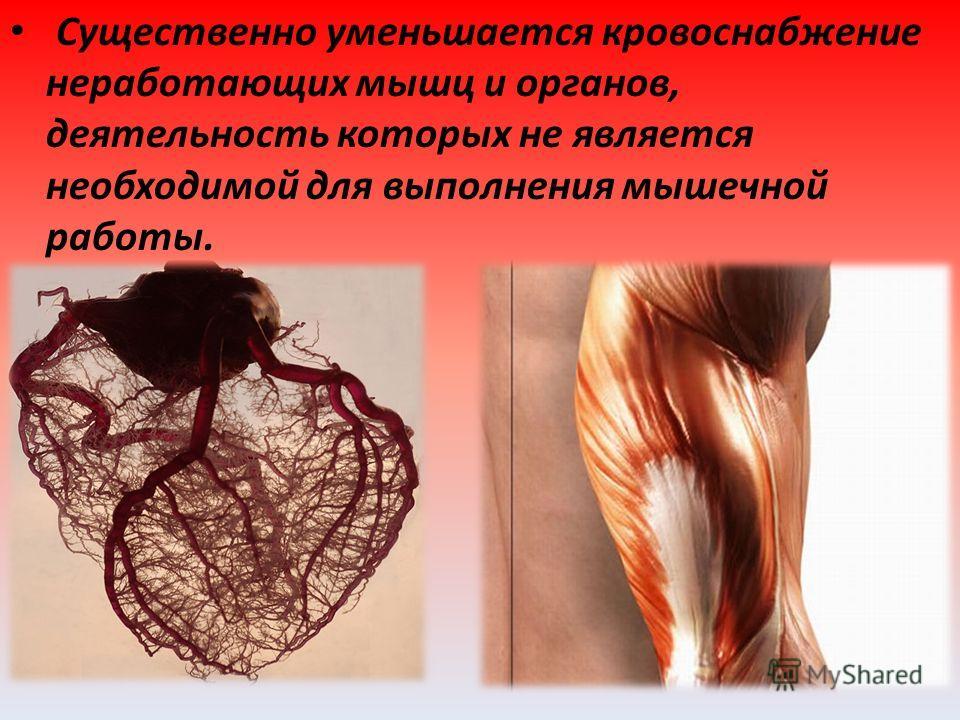 Существенно уменьшается кровоснабжение неработающих мышц и органов, деятельность которых не является необходимой для выполнения мышечной работы.