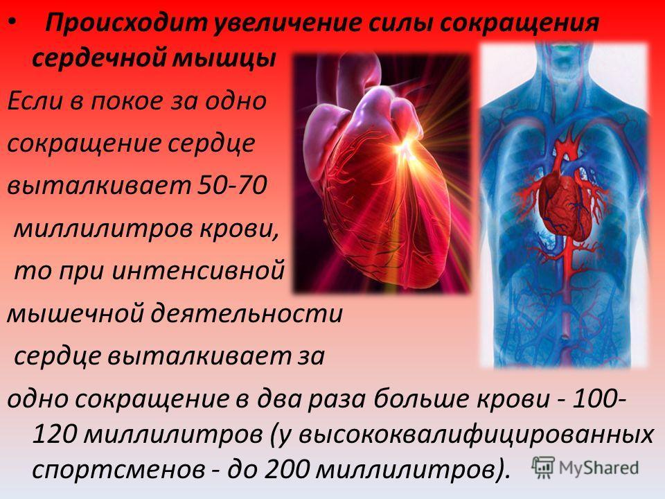 Происходит увеличение силы сокращения сердечной мышцы Если в покое за одно сокращение сердце выталкивает 50-70 миллилитров крови, то при интенсивной мышечной деятельности сердце выталкивает за одно сокращение в два раза больше крови - 100- 120 миллил