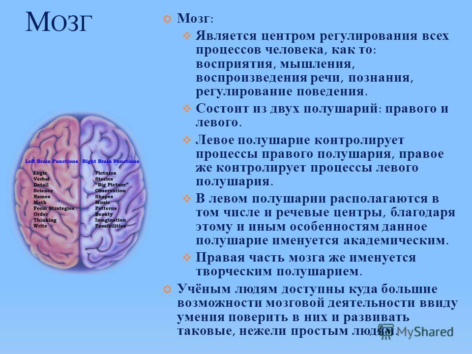 М ОЗГ Мозг: Является центром регулирования всех процессов человека, как то: восприятия, мышления, воспроизведения речи, познания, регулирование поведения. Состоит из двух полушарий: правого и левого. Левое полушарие контролирует процессы правого полу