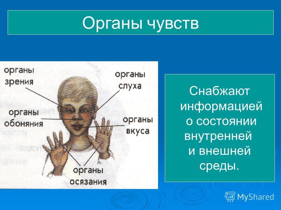 Органы чувств Снабжают информацией о состоянии внутренней и внешней среды.
