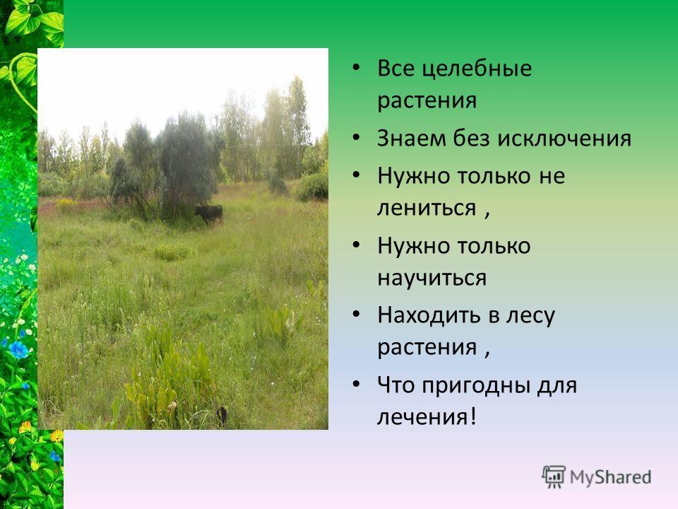 Все целебные растения Знаем без исключения Нужно только не лениться, Нужно только научиться Находить в лесу растения, Что пригодны для лечения!