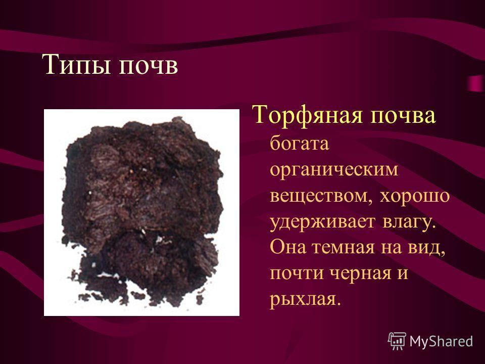 Типы почв Торфяная почва богата органическим веществом, хорошо удерживает влагу. Она темная на вид, почти черная и рыхлая.
