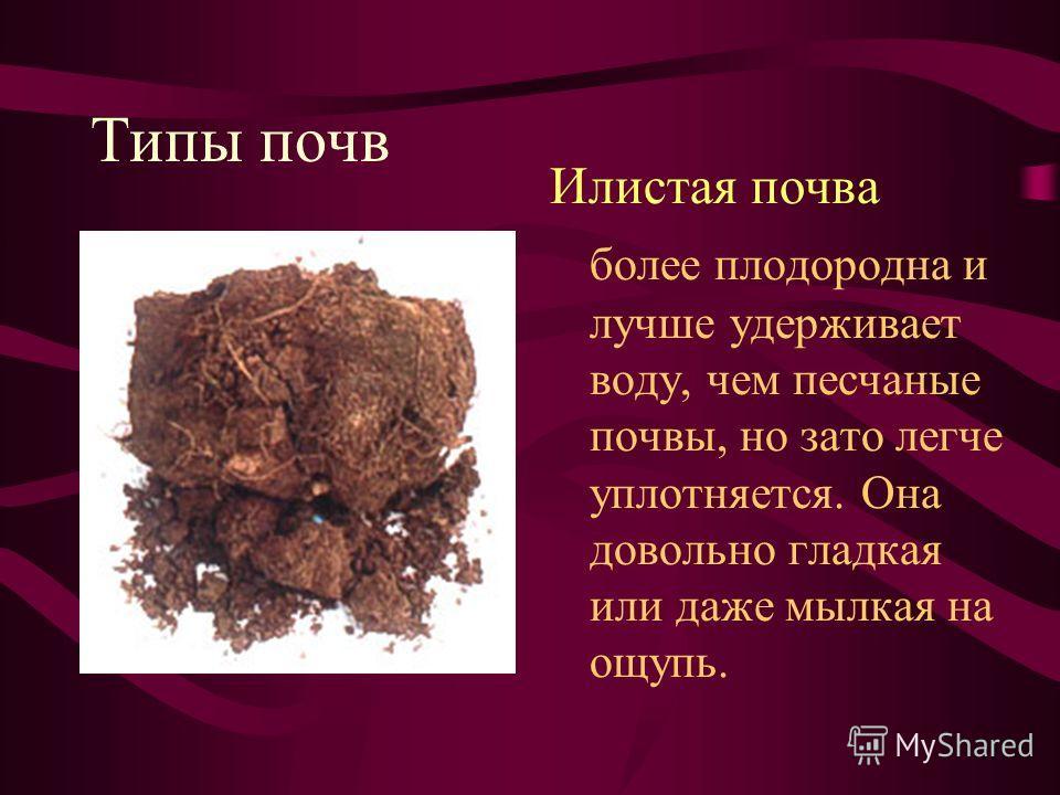 Типы почв Илистая почва более плодородна и лучше удерживает воду, чем песчаные почвы, но зато легче уплотняется. Она довольно гладкая или даже мылкая на ощупь.
