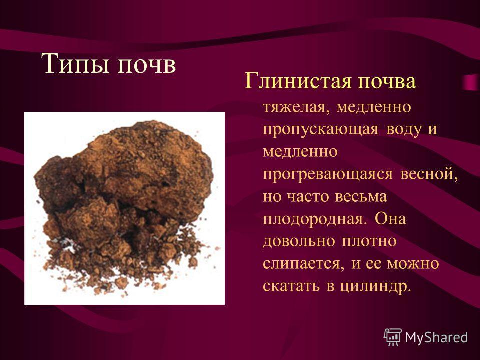Типы почв Глинистая почва тяжелая, медленно пропускающая воду и медленно прогревающаяся весной, но часто весьма плодородная. Она довольно плотно слипается, и ее можно скатать в цилиндр.