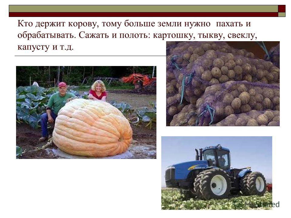 Кто держит корову, тому больше земли нужно пахать и обрабатывать. Сажать и полоть: картошку, тыкву, свеклу, капусту и т.д.