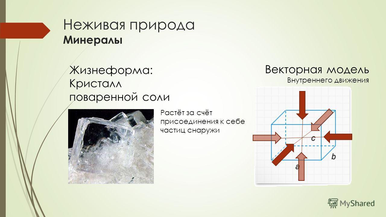 Неживая природа Минералы Жизнеформа: Кристалл поваренной соли Растёт за счёт присоединения к себе частиц снаружи Векторная модель Внутреннего движения