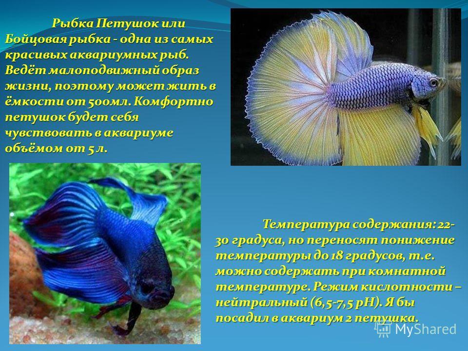 Рыбка Петушок или Бойцовая рыбка - одна из самых красивых аквариумных рыб. Ведёт малоподвижный образ жизни, поэтому может жить в ёмкости от 500мл. Комфортно петушок будет себя чувствовать в аквариуме объёмом от 5 л. Температура содержания: 22- 30 гра