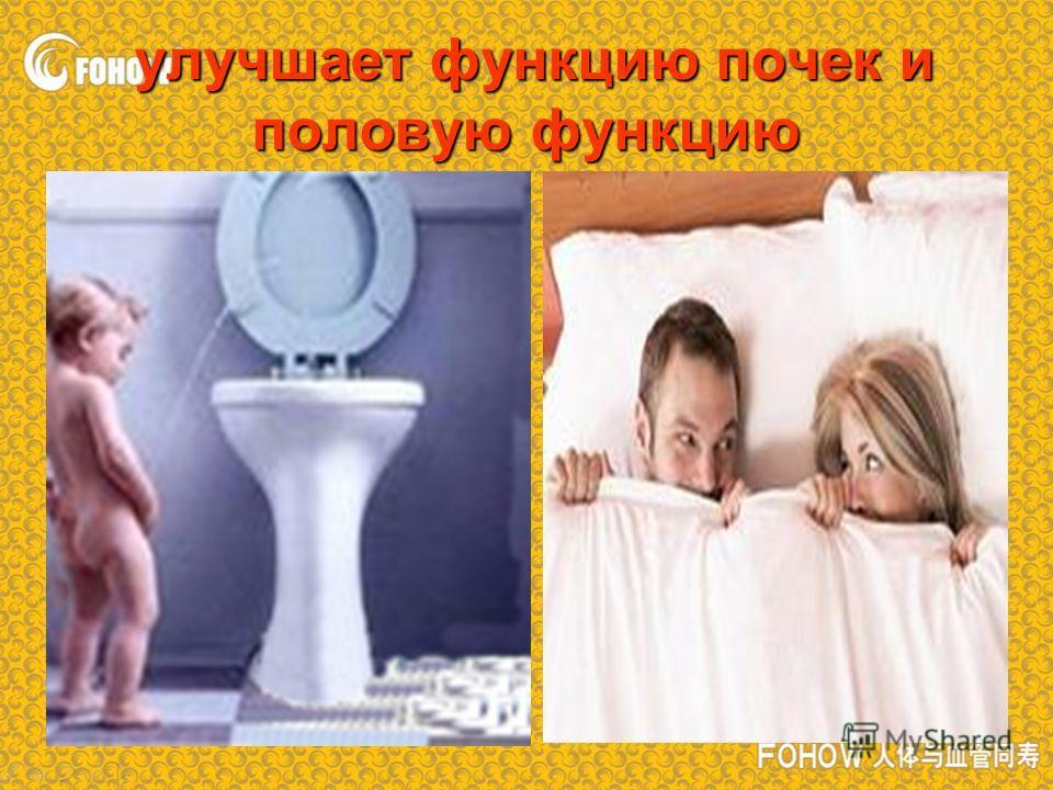 улучшает функцию почек и половую функцию улучшает функцию почек и половую функцию