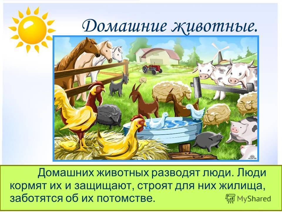 Домашние животные. Домашних животных разводят люди. Люди кормят их и защищают, строят для них жилища, заботятся об их потомстве.