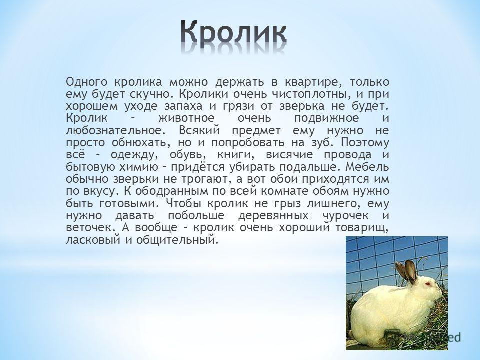 Одного кролика можно держать в квартире, только ему будет скучно. Кролики очень чистоплотны, и при хорошем уходе запаха и грязи от зверька не будет. Кролик – животное очень подвижное и любознательное. Всякий предмет ему нужно не просто обнюхать, но и