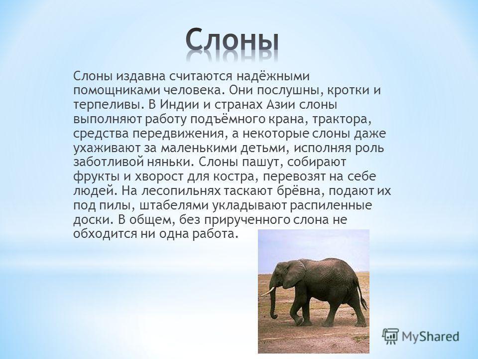 Слоны издавна считаются надёжными помощниками человека. Они послушны, кротки и терпеливы. В Индии и странах Азии слоны выполняют работу подъёмного крана, трактора, средства передвижения, а некоторые слоны даже ухаживают за маленькими детьми, исполняя