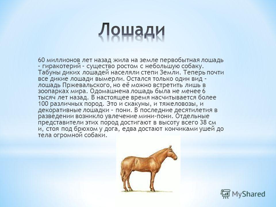 60 миллионов лет назад жила на земле первобытная лошадь – гиракотерий – существо ростом с небольшую собаку. Табуны диких лошадей населяли степи Земли. Теперь почти все дикие лошади вымерли. Остался только один вид – лошадь Пржевальского, но её можно