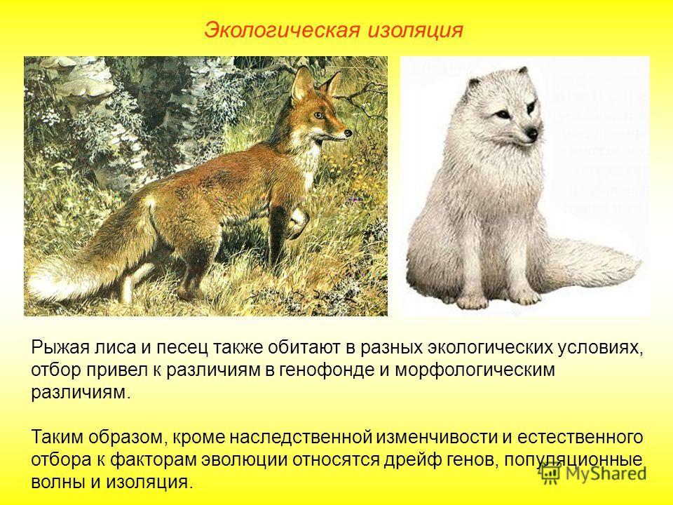 Экологическая изоляция Рыжая лиса и песец также обитают в разных экологических условиях, отбор привел к различиям в генофонде и морфологическим различиям. Таким образом, кроме наследственной изменчивости и естественного отбора к факторам эволюции отн