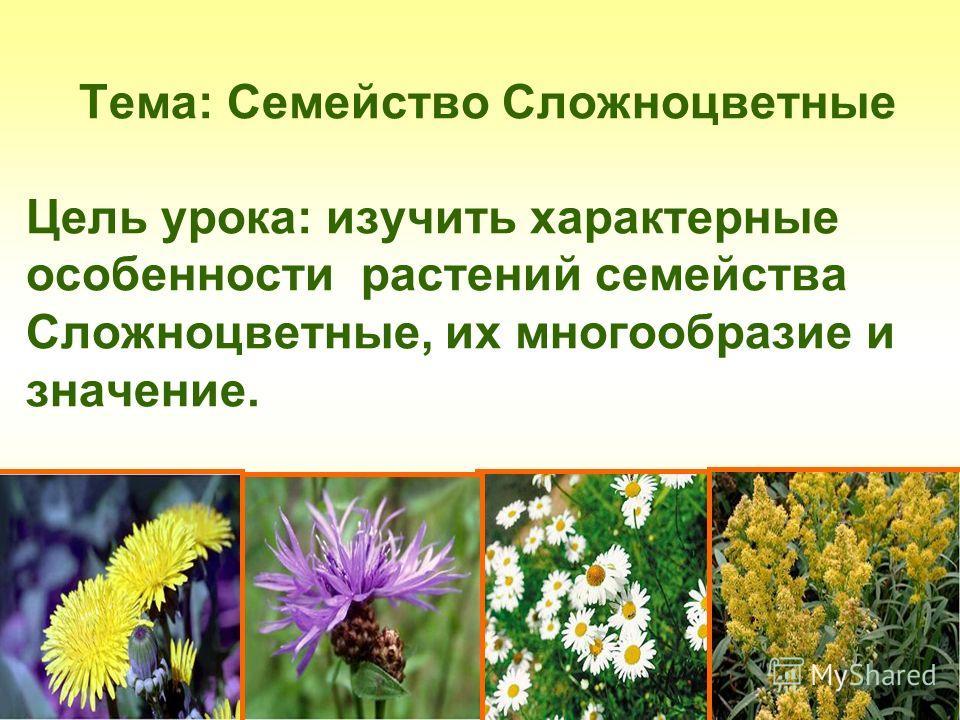 Тема: Семейство Сложноцветные Цель урока: изучить характерные особенности растений семейства Сложноцветные, их многообразие и значение.