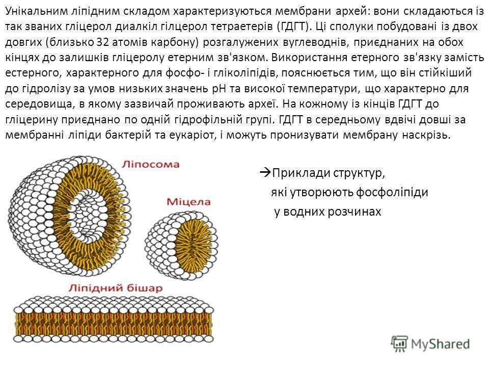 Унікальним ліпідним складом характеризуються мембрани архей: вони складаються із так званих гліцерол диалкіл гілцерол тетраетерів (ГДГТ). Ці сполуки побудовані із двох довгих (близько 32 атомів карбону) розгалужених вуглеводнів, приєднаних на обох кі