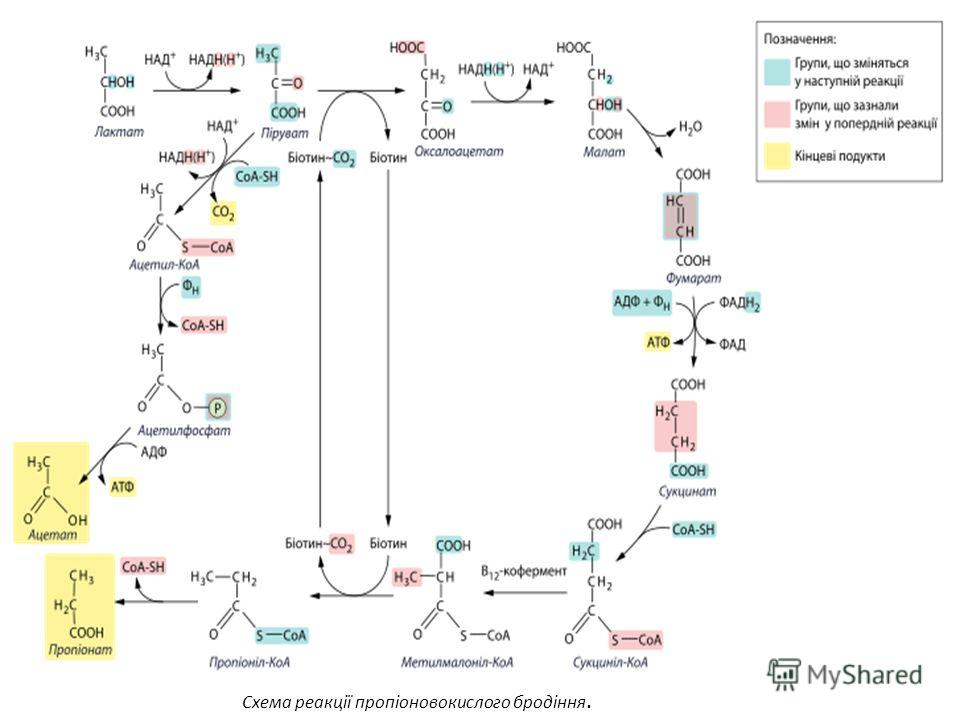 Схема реакції пропіоновокислого бродіння.