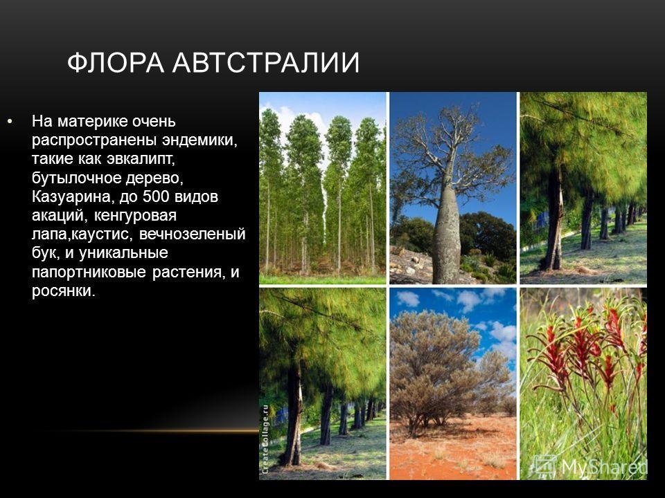На материке очень распространены эндемики, такие как эвкалипт, бутылочное дерево, Казуарина, до 500 видов акаций, кенгуровая лапа,каустис, вечнозеленый бук, и уникальные папортниковые растения, и росянки. ФЛОРА АВТСТРАЛИИ