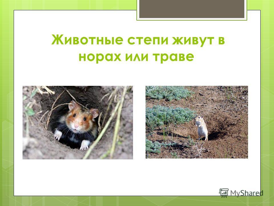 Животные степи живут в норах или траве