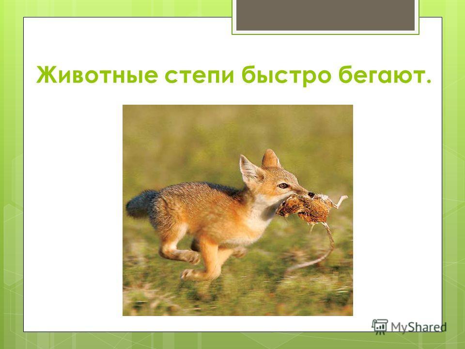 Животные степи быстро бегают.