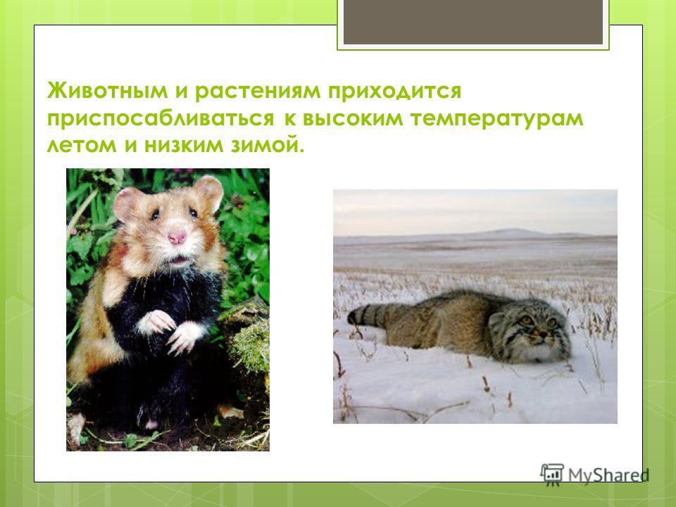 Животным и растениям приходится приспосабливаться к высоким температурам летом и низким зимой.