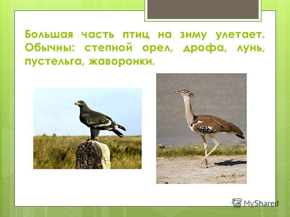 Большая часть птиц на зиму улетает. Обычны: степной орел, дрофа, лунь, пустельга, жаворонки.