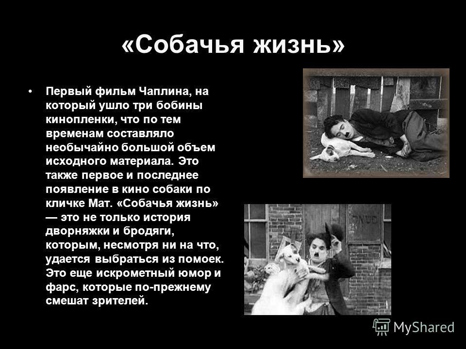 «Собачья жизнь» Первый фильм Чаплина, на который ушло три бобины кинопленки, что по тем временам составляло необычайно большой объем исходного материала. Это также первое и последнее появление в кино собаки по кличке Мат. «Собачья жизнь» это не тольк