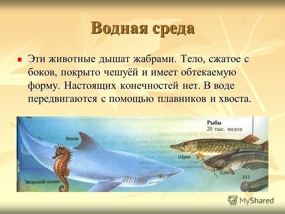 Водная среда Эти животные дышат жабрами. Тело, сжатое с боков, покрыто чешуёй и имеет обтекаемую форму. Настоящих конечностей нет. В воде передвигаются с помощью плавников и хвоста. Эти животные дышат жабрами. Тело, сжатое с боков, покрыто чешуёй и и