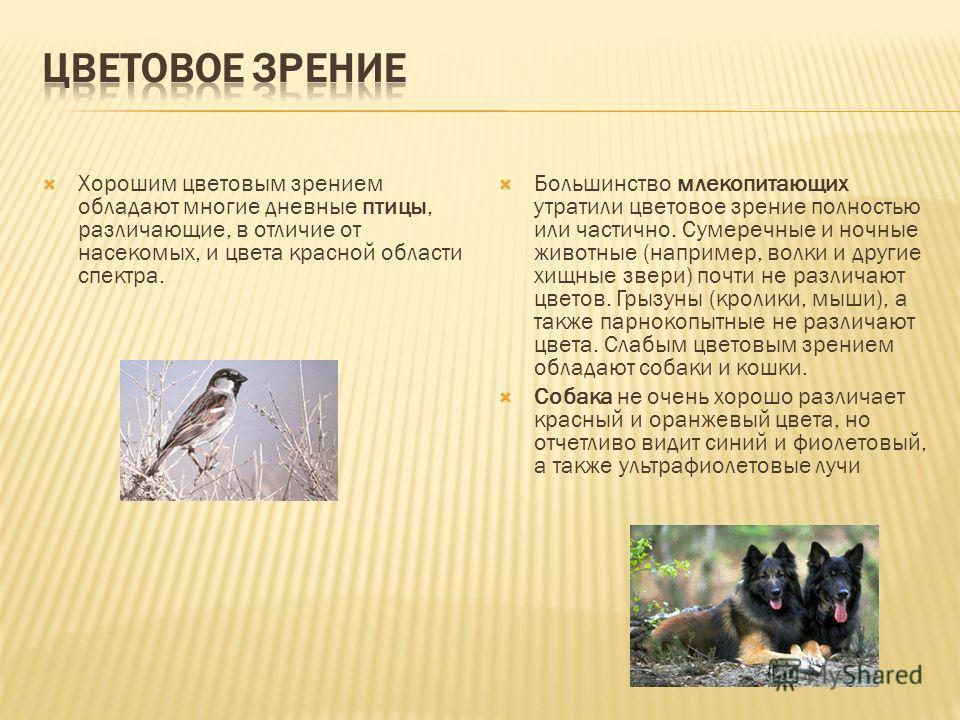 Хорошим цветовым зрением обладают многие дневные птицы, различающие, в отличие от насекомых, и цвета красной области спектра. Большинство млекопитающих утратили цветовое зрение полностью или частично. Сумеречные и ночные животные (например, волки и д