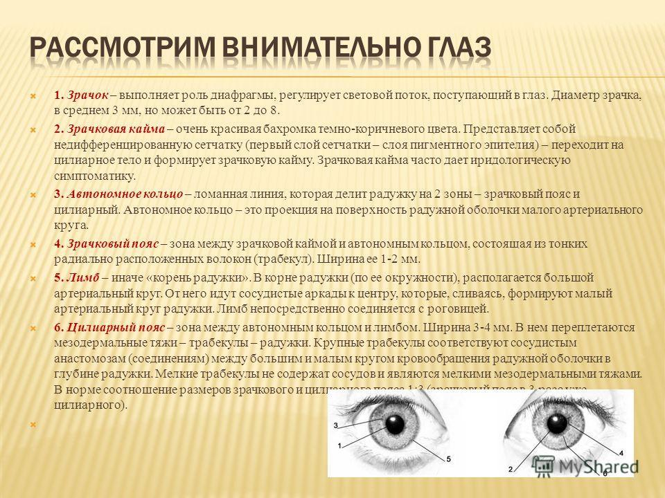 1. Зрачок – выполняет роль диафрагмы, регулирует световой поток, поступающий в глаз. Диаметр зрачка, в среднем 3 мм, но может быть от 2 до 8. 2. Зрачковая кайма – очень красивая бахромка темно-коричневого цвета. Представляет собой недифференцированну