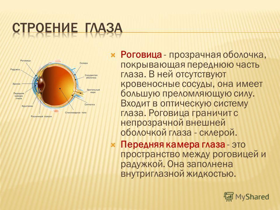 Роговица - прозрачная оболочка, покрывающая переднюю часть глаза. В ней отсутствуют кровеносные сосуды, она имеет большую преломляющую силу. Входит в оптическую систему глаза. Роговица граничит с непрозрачной внешней оболочкой глаза - склерой. Передн