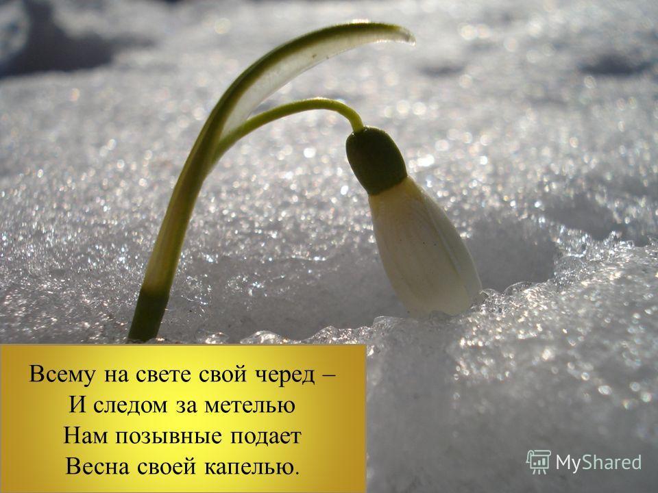 Всему на свете свой черед – И следом за метелью Нам позывные подает Весна своей капелью.