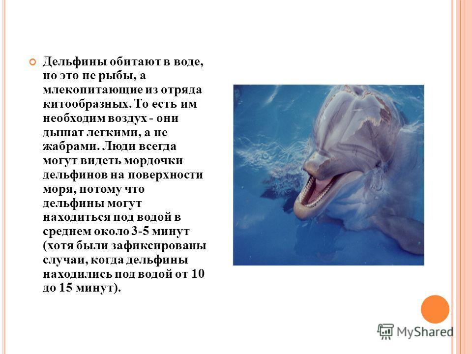 Дельфины обитают в воде, но это не рыбы, а млекопитающие из отряда китообразных. То есть им необходим воздух - они дышат легкими, а не жабрами. Люди всегда могут видеть мордочки дельфинов на поверхности моря, потому что дельфины могут находиться под