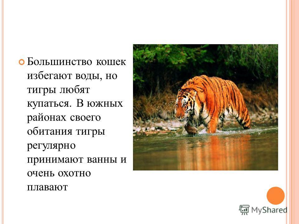 Большинство кошек избегают воды, но тигры любят купаться. В южных районах своего обитания тигры регулярно принимают ванны и очень охотно плавают