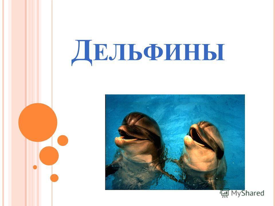 Д ЕЛЬФИНЫ