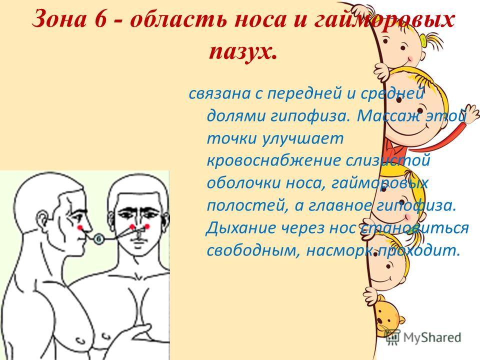 Зона 6 - область носа и гайморовых пазух. связана с передней и средней долями гипофиза. Массаж этой точки улучшает кровоснабжение слизистой оболочки носа, гайморовых полостей, а главное гипофиза. Дыхание через нос становиться свободным, насморк прохо