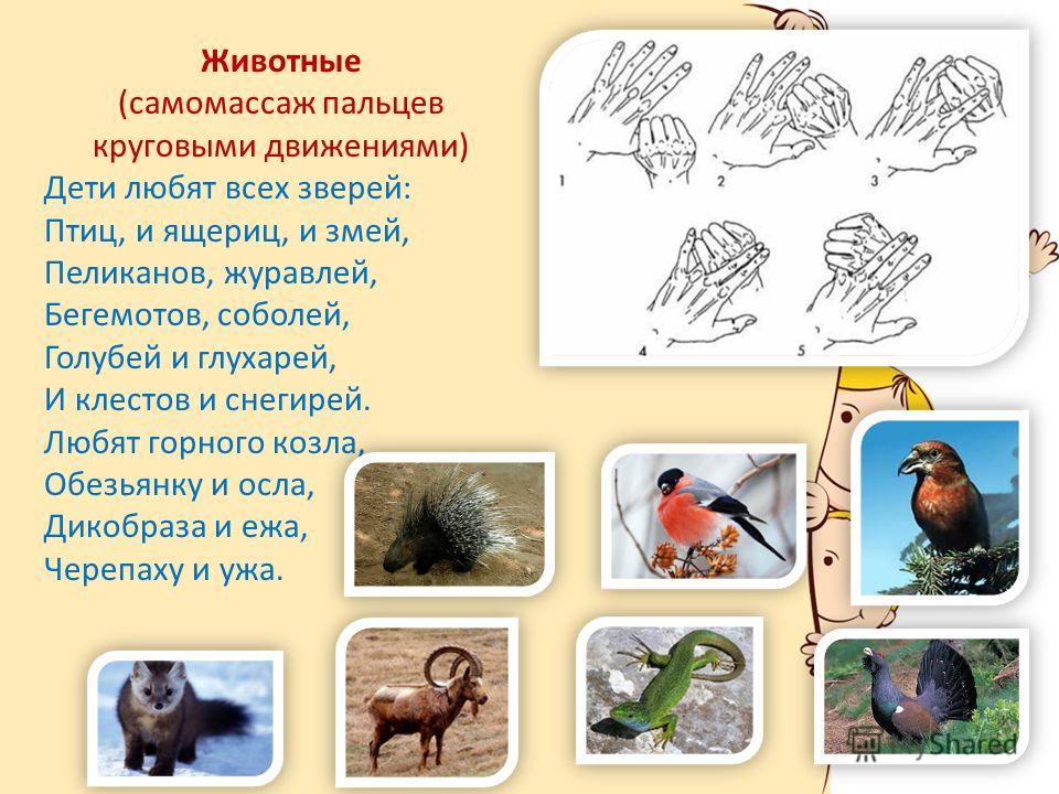 Животные (самомассаж пальцев круговыми движениями) Дети любят всех зверей: Птиц, и ящериц, и змей, Пеликанов, журавлей, Бегемотов, соболей, Голубей и глухарей, И клестов и снегирей. Любят горного козла, Обезьянку и осла, Дикобраза и ежа, Черепаху и у
