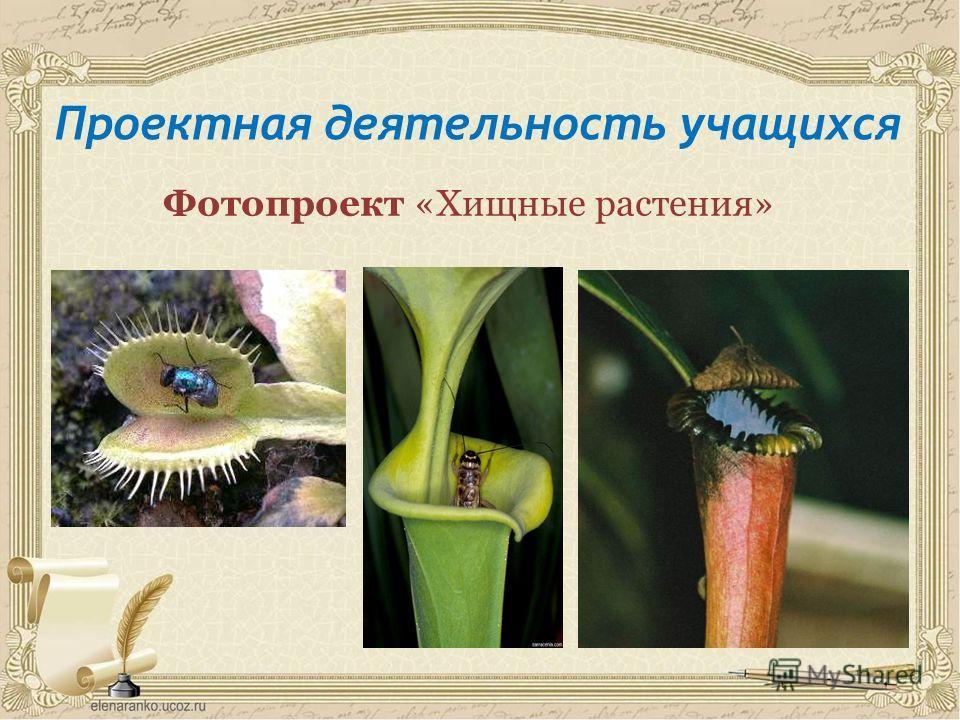 Проектная деятельность учащихся Фотопроект «Хищные растения»