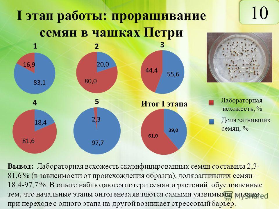 I этап работы: проращивание семян в чашках Петри Вывод: Лабораторная всхожесть скарифицированных семян составила 2,3- 81,6 % (в зависимости от происхождения образца), доля загнивших семян – 18,4-97,7 %. В опыте наблюдаются потери семян и растений, об
