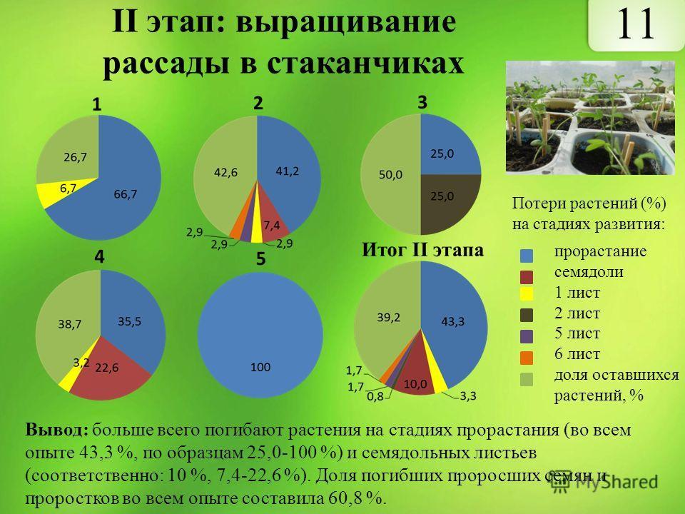 II этап: выращивание рассады в стаканчиках прорастание cемядоли 1 лист 2 лист 5 лист 6 лист доля оставшихся растений, % Вывод: больше всего погибают растения на стадиях прорастания (во всем опыте 43,3 %, по образцам 25,0-100 %) и семядольных листьев