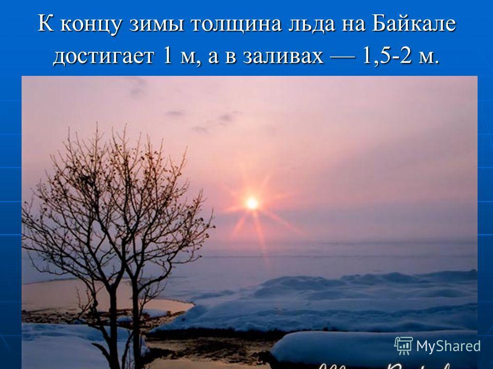 К концу зимы толщина льда на Байкале достигает 1 м, а в заливах 1,5-2 м.