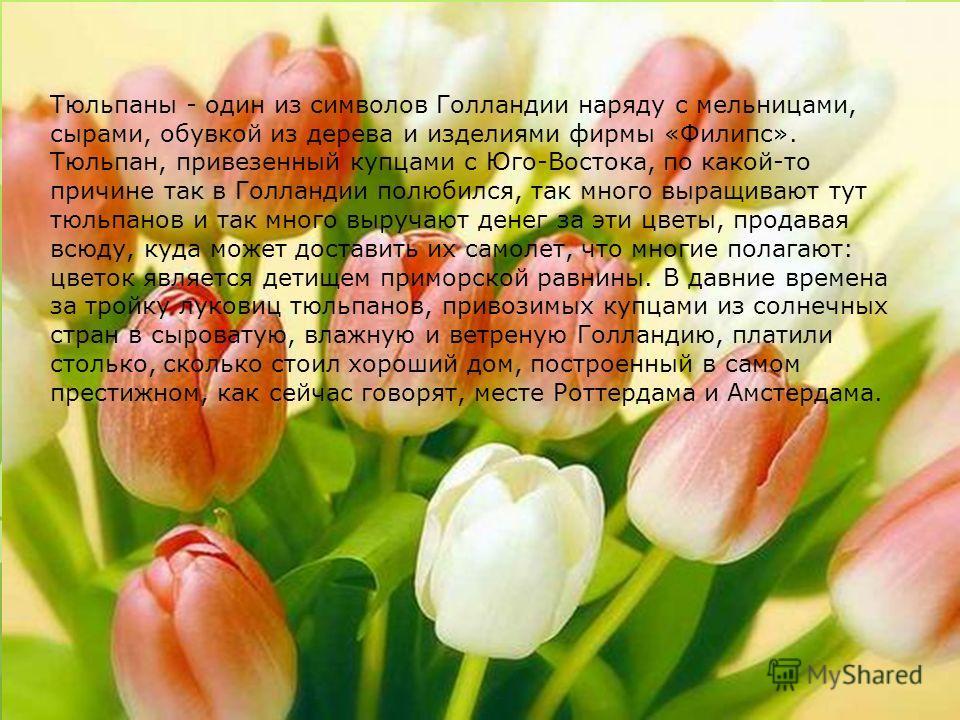 Тюльпаны - один из символов Голландии наряду с мельницами, сырами, обувкой из дерева и изделиями фирмы «Филипс». Тюльпан, привезенный купцами с Юго-Востока, по какой-то причине так в Голландии полюбился, так много выращивают тут тюльпанов и так много