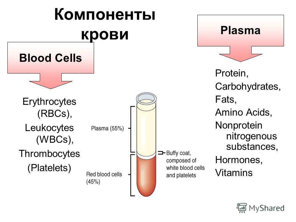 Blood Cells Компоненты крови Erythrocytes (RBCs), Leukocytes (WBCs), Thrombocytes (Platelets) Protein, Carbohydrates, Fats, Amino Acids, Nonprotein nitrogenous substances, Hormones, Vitamins Plasma